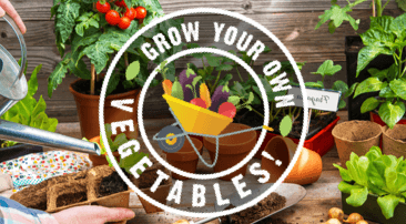 Go green-fingered: grow your own veggies!
