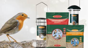 How to attract wild birds to your garden this winter